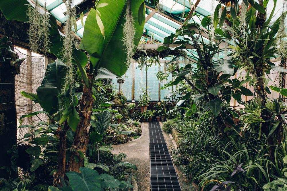 Haarkon Winterbourne Birmingham Garden Glasshouse Plants England
