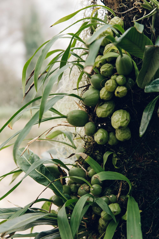 Haarkon Winterbourne Birmingham Garden Glasshouse Plants England fern orchid moss