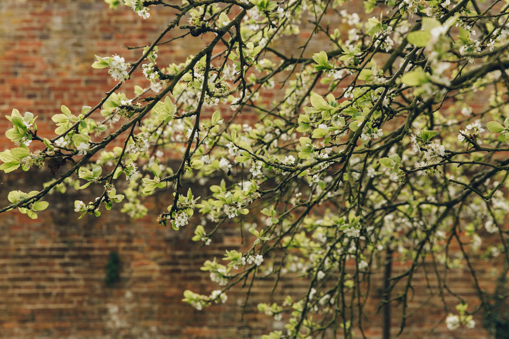 Haarkon Fernery Calke National Trust Garden Plants England