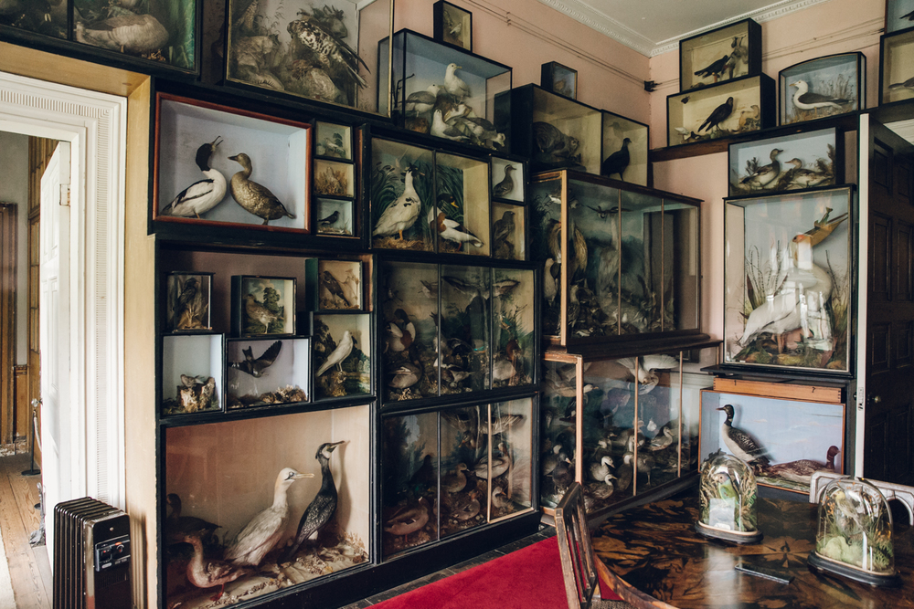 Haarkon Calke Abbey National Trust Stately Home Interior House Taxidermy