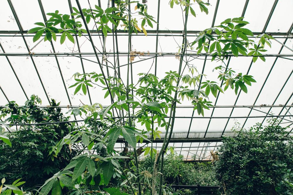 Haarkon Tropical World Leeds Yorkshire Butterfly Bird Greenhouse Glasshouse Garden Plants Jungle