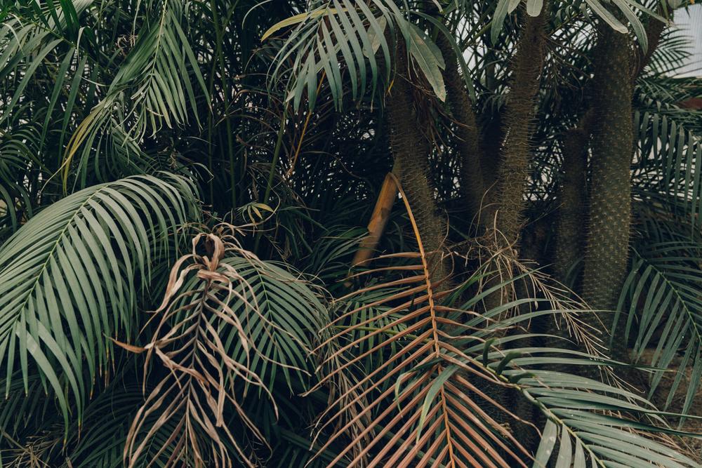 HAARKON Tropical Jungle Glasshouse Greenhouse Plants Garden desert cacti cactus