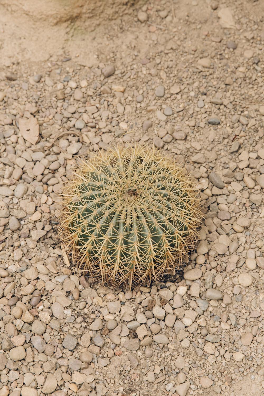 HAARKON Tropical Jungle Glasshouse Greenhouse Plants Garden cactus cacti desert arid sand