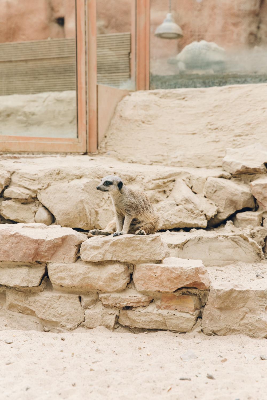 HAARKON Tropical Jungle Glasshouse Greenhouse Plants Garden animals meerkat zoo