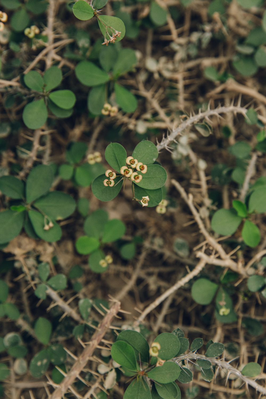 HAARKON Tropical Jungle Glasshouse Greenhouse Plants Garden euphorbia spine cactus desert arid