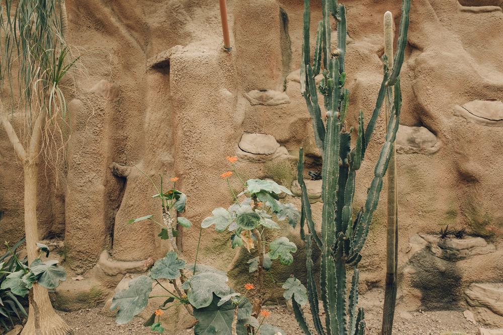HAARKON Tropical Jungle Glasshouse Greenhouse Plants Garden arid desert hot cacti succulent