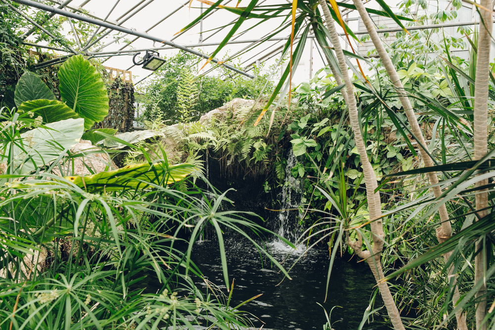 HAARKON Tropical Jungle Glasshouse Greenhouse Plants Garden