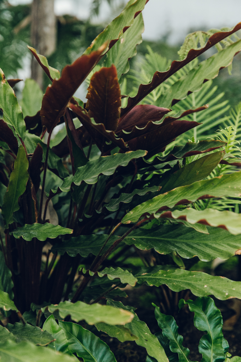 Haarkon plants sky garden skygarden greenery fern fernery london