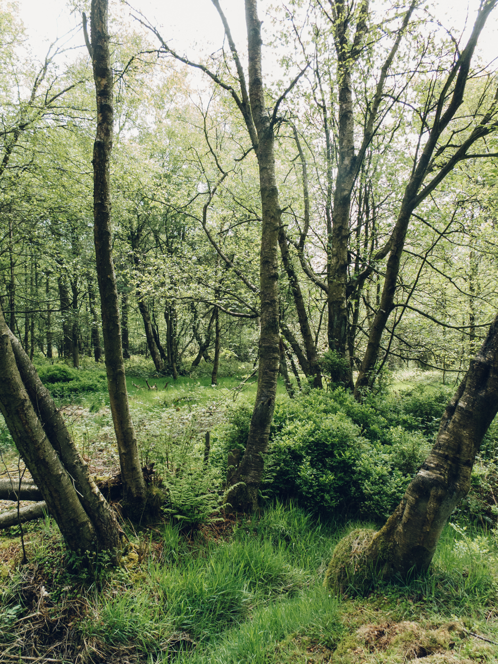 Haarkon Forest Woods Trees Walk Nature Yorkshire Peak District leaf green plants woodland