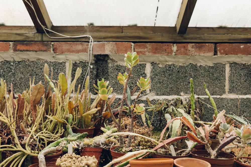 Haarkon cacti cactus orchid succulent greenhouse glasshouse nursery plants nature