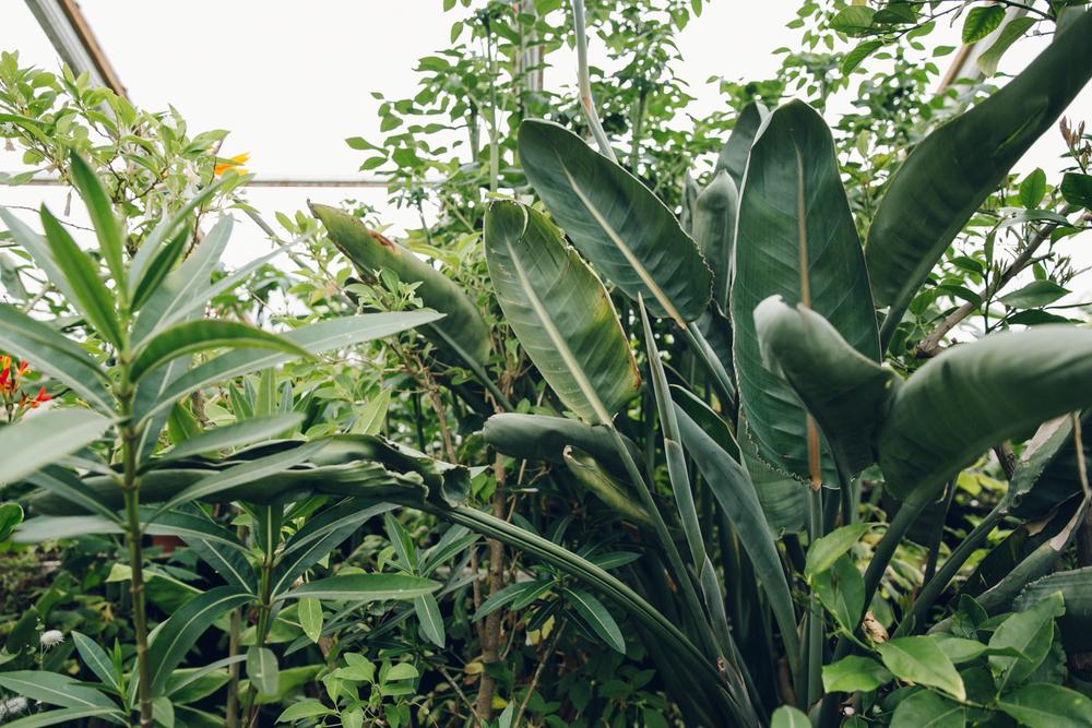 Haarkon Plant Greenery Foliage Garden Greenhouse Glasshouse leaf