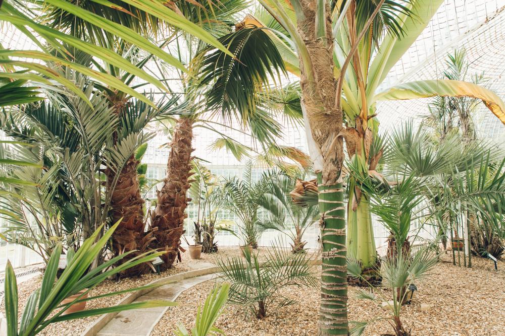 Haarkon Plants Fernery Glasshouse Greenhouse Bicton Garden Jungle