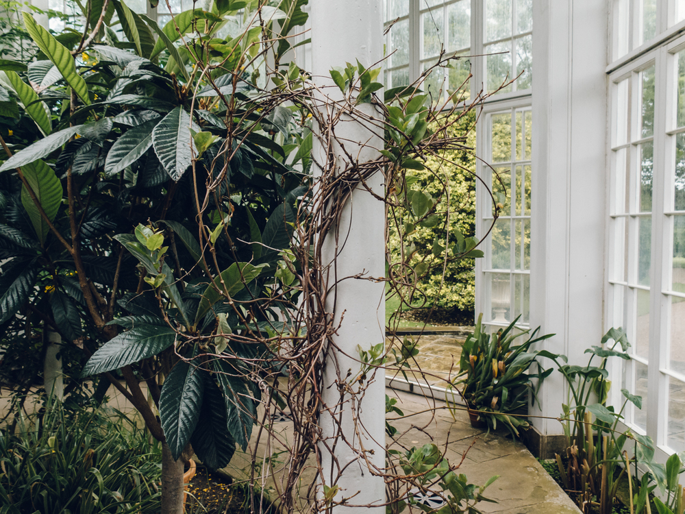 Haarkon Tatton Park Garden National Trust Glasshouse Greenhouse Fernery Ferns Plants