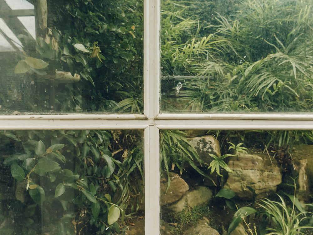 Haarkon Tatton Park Garden National Trust Glasshouse Greenhouse Fernery Ferns Plants window