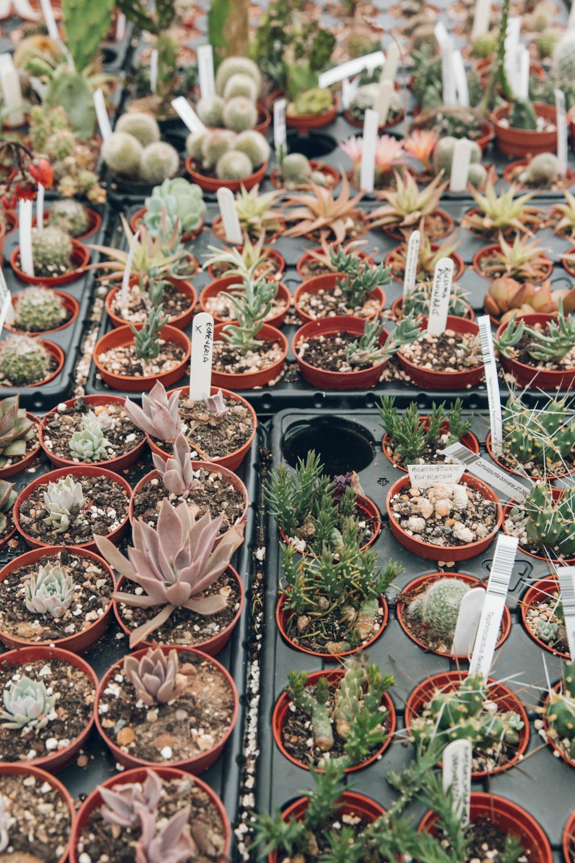 Haarkon Cactusshop Cactus Cacti nursery plants garden travel visit grow nature