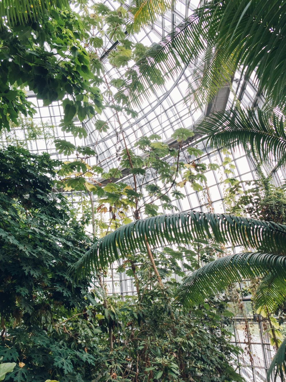 Berlin Botanical Garden U2014 Haarkon | Lifestyle And Travel Blog.