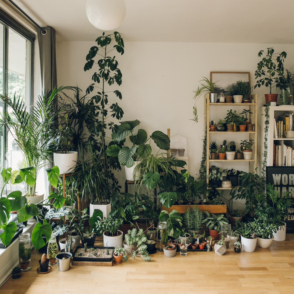 Houseplant Care Tips Haarkon Lifestyle And Travel Blog