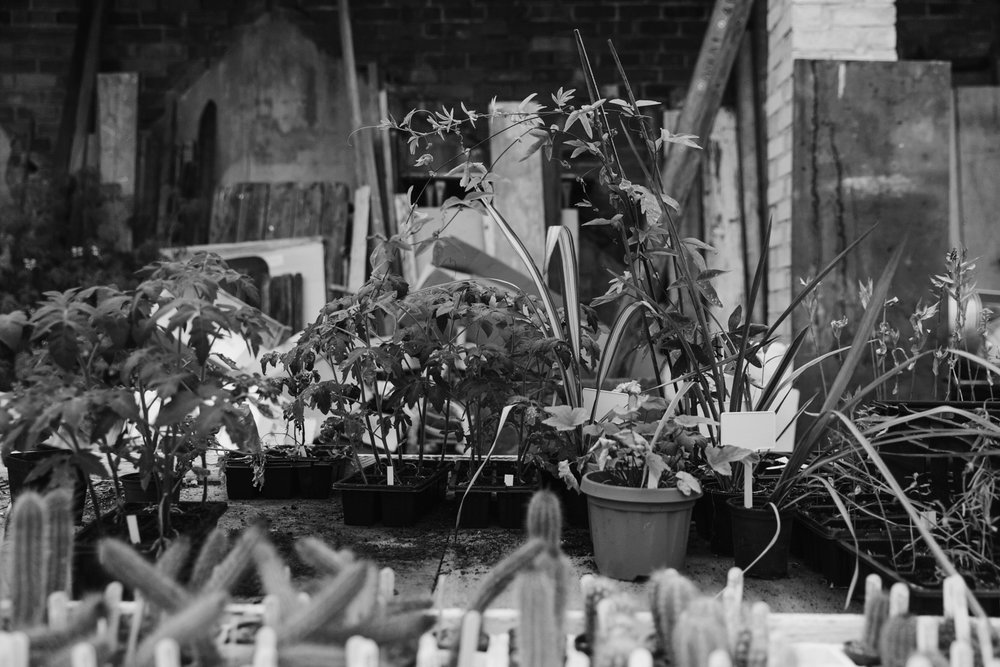 Plants in the potting shed.