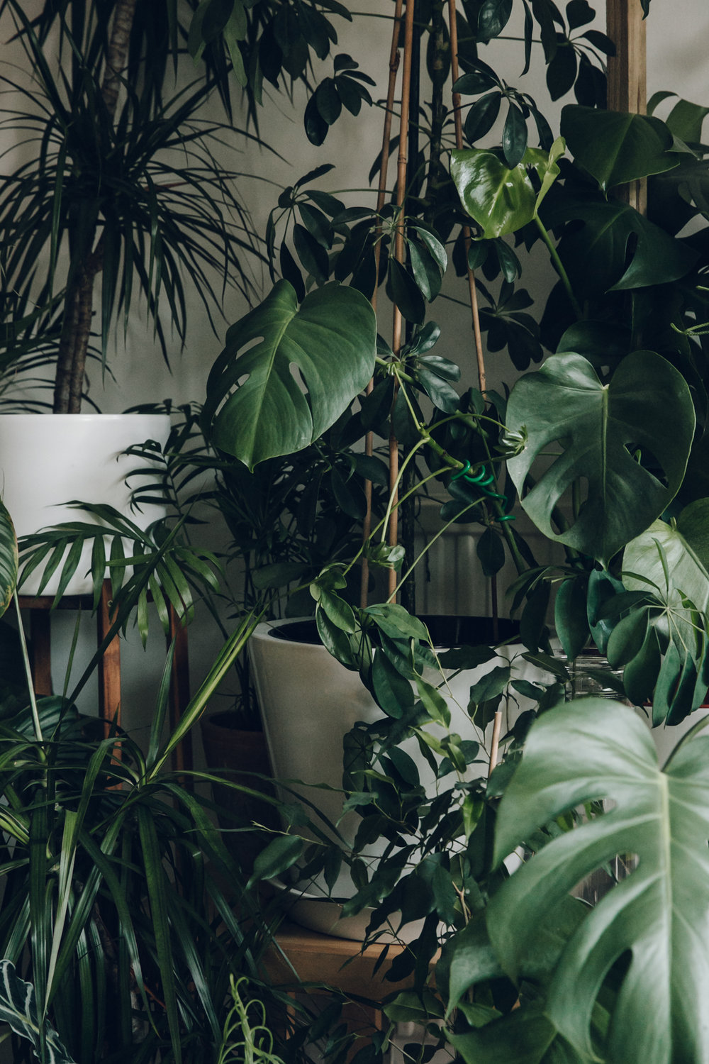 An indoor jungle.
