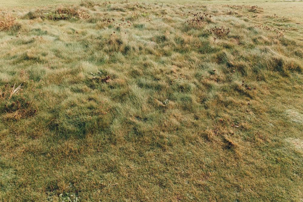Luscious grass.