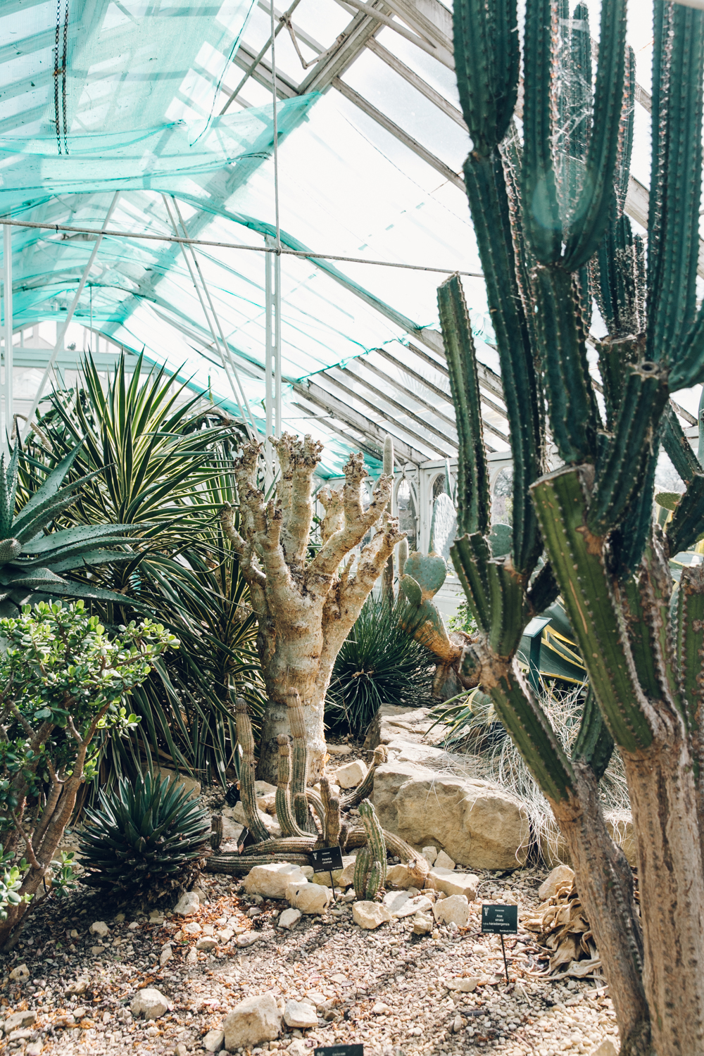 Cactus garden inside the glasshouse.