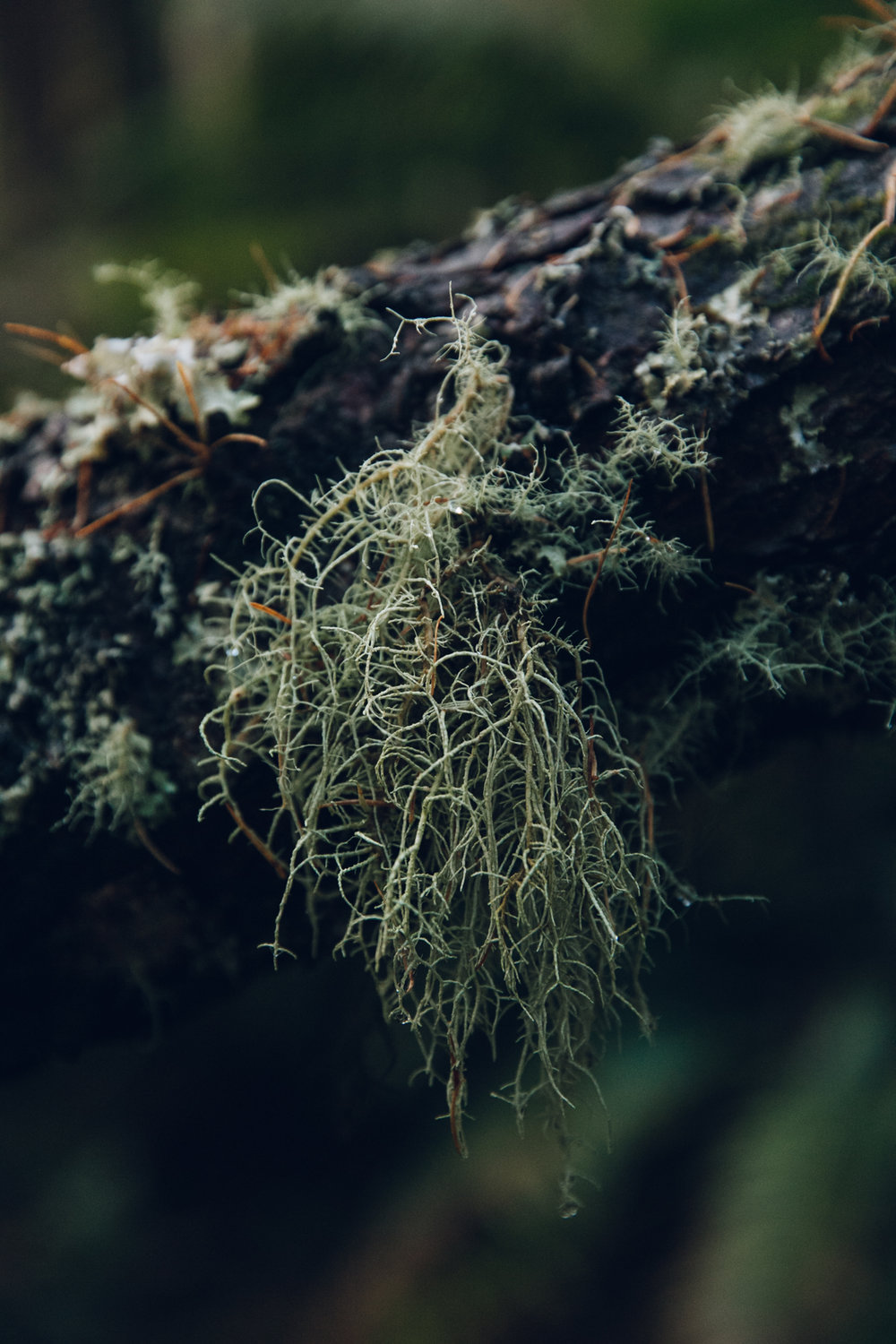 Lichen and moss in the forest.