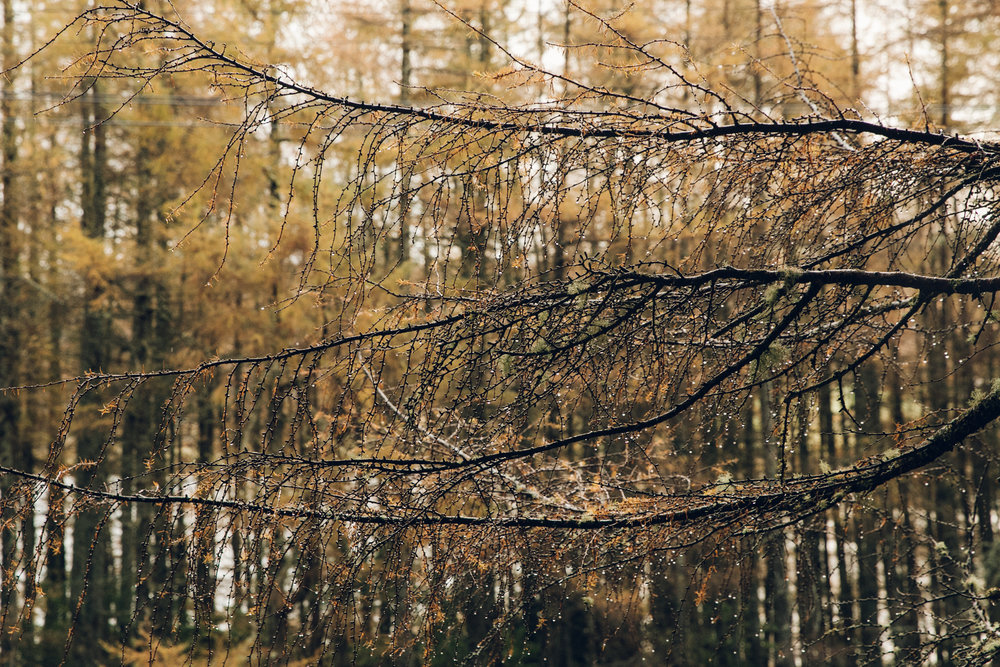 A wet Autumn in the forest on the Isle of Skye.