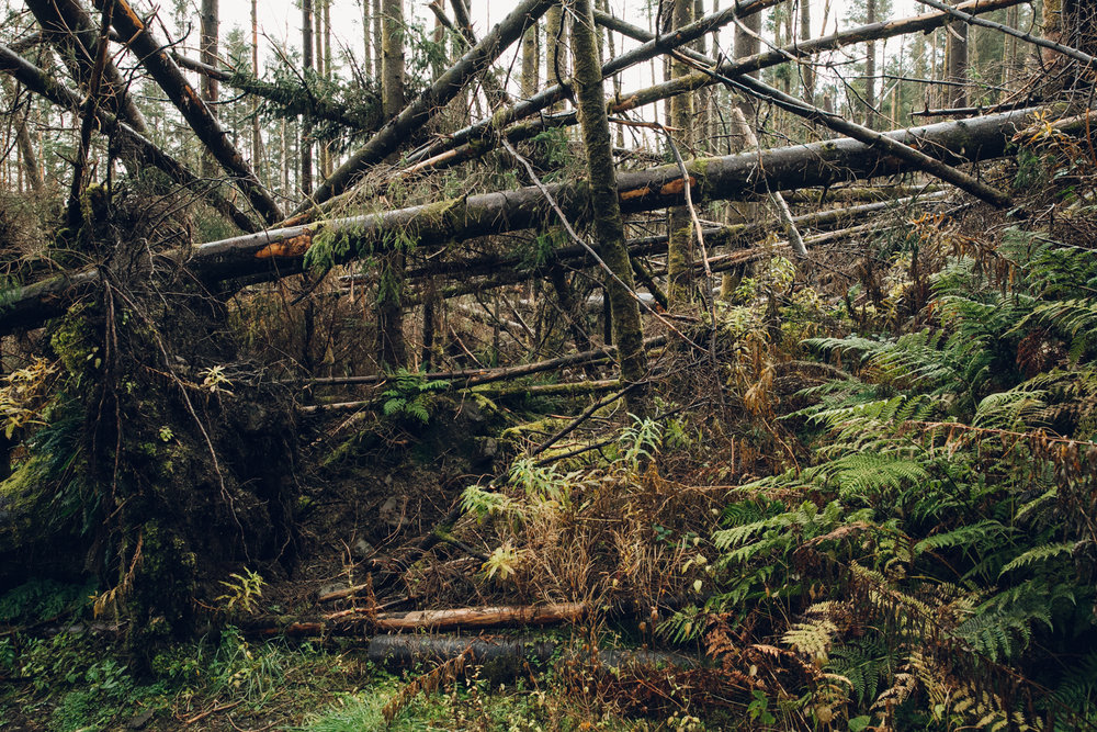 Fallen trees in the woods on the Isle of Skye.