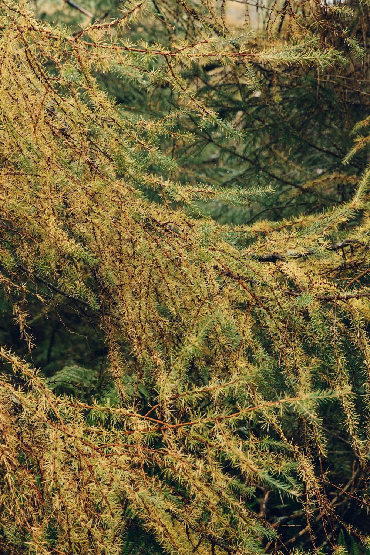 Autumnal woodland textures.