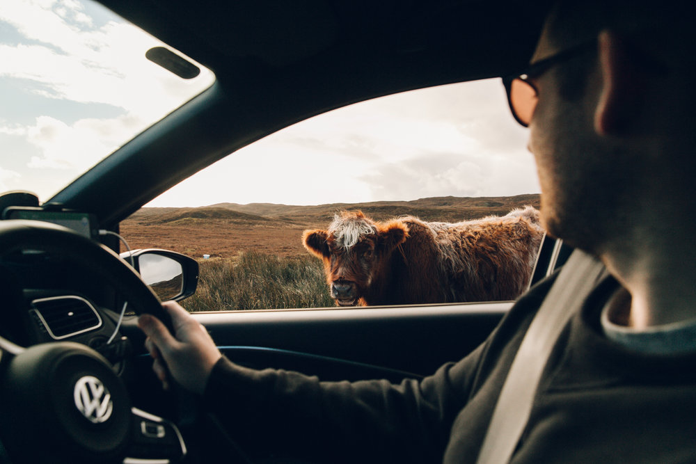 Making friends on a Scottish road trip.