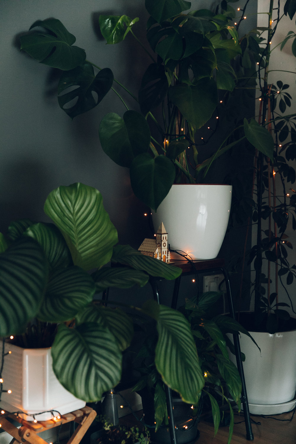 Houseplant Christmas decorations.