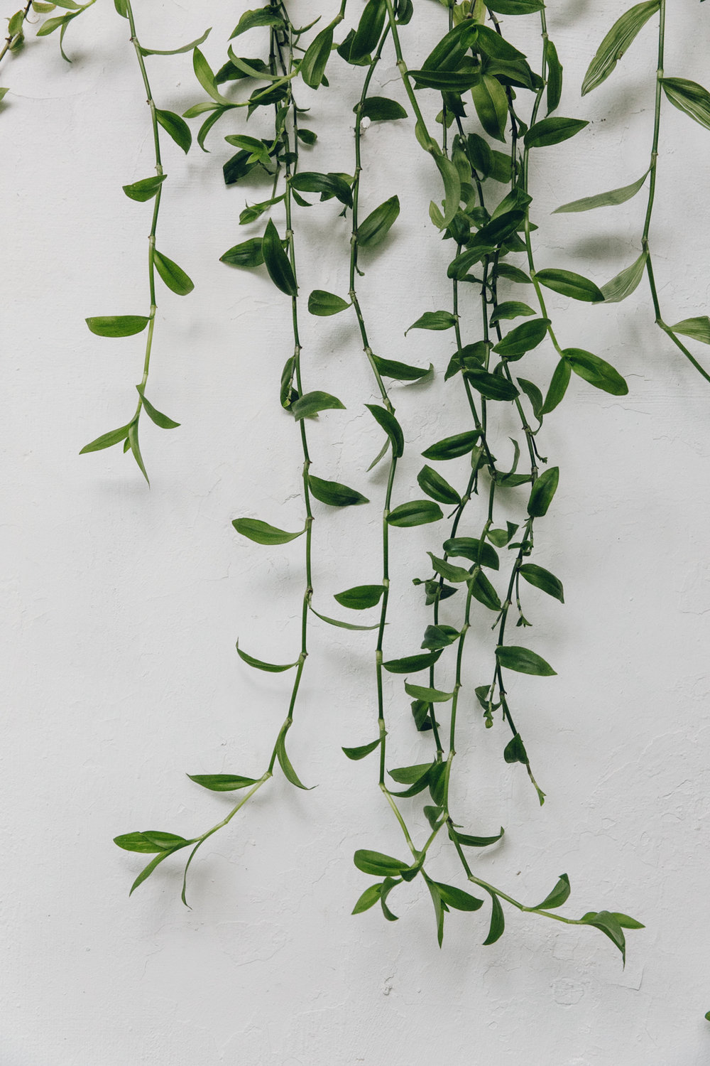Plants decorating the walls.