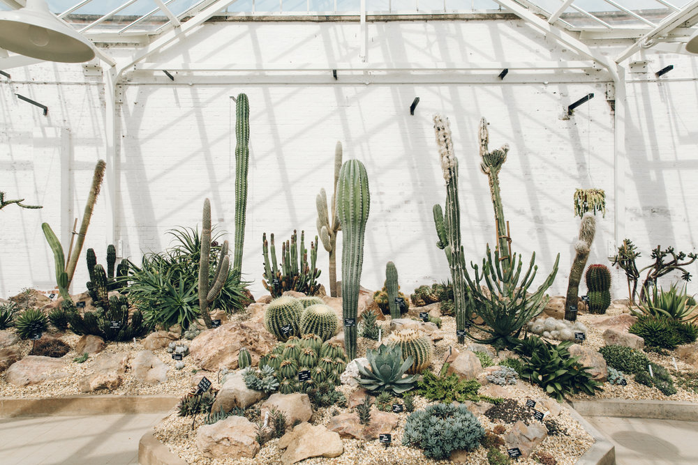 The cacti house at Dyffryn Gardens in Wales.