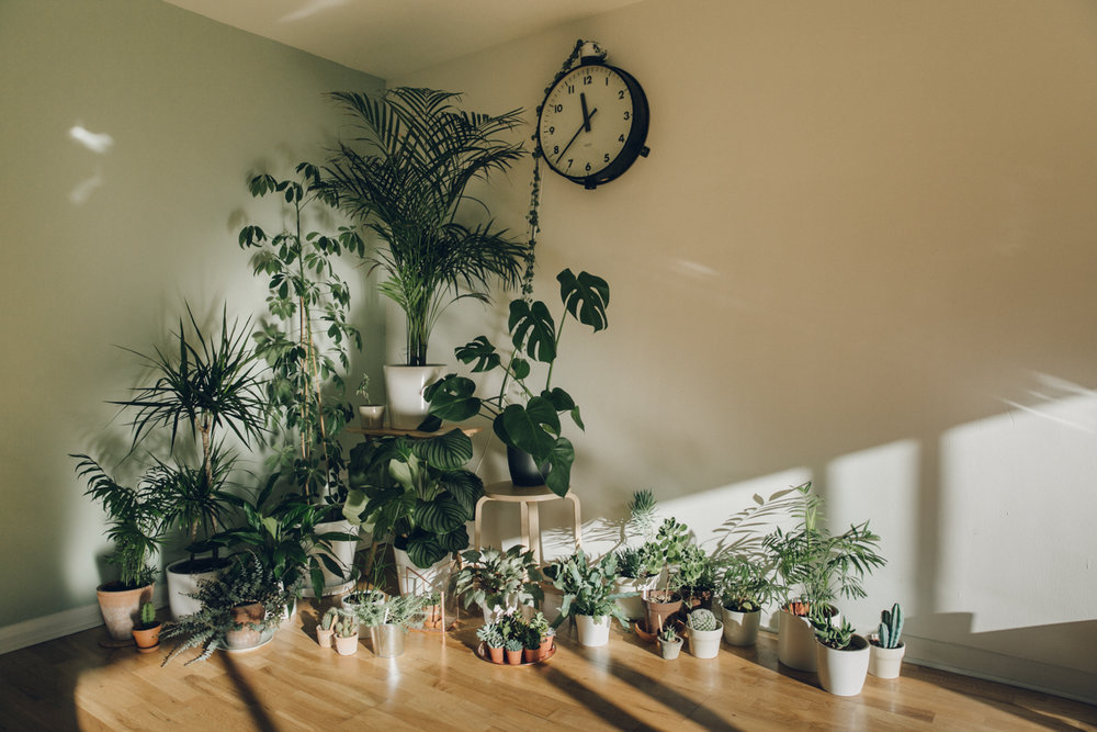 Indoor plant collection.