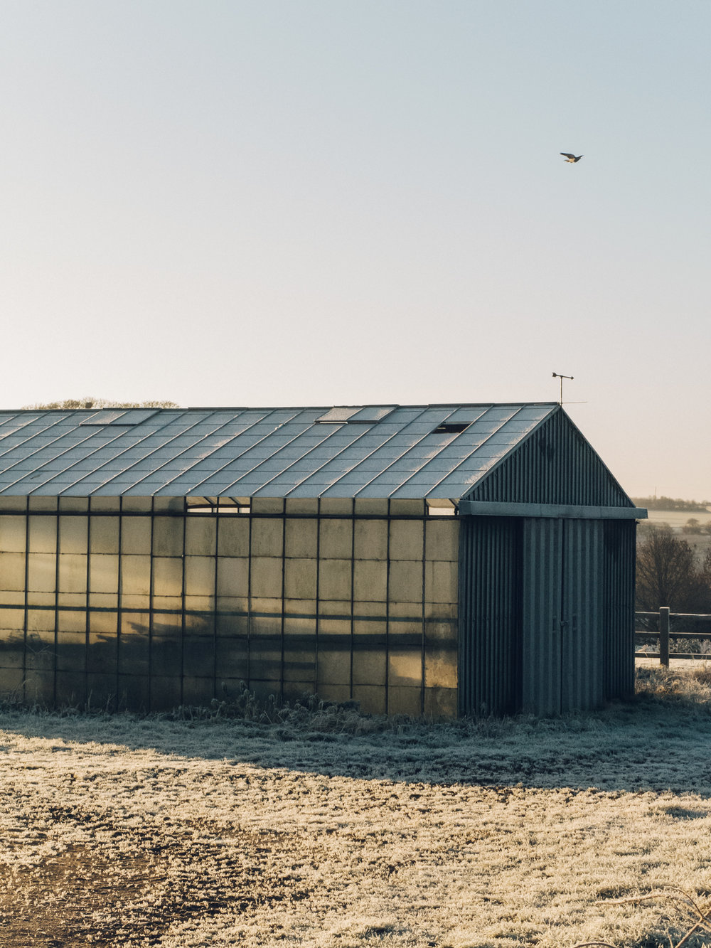Frozen greenhouse in the Winter sunshine.