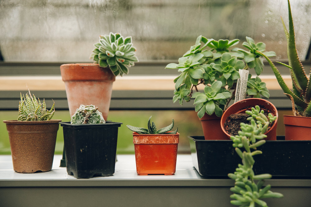 Plants on the aluminium shelving of a Cultivar greenhouse.