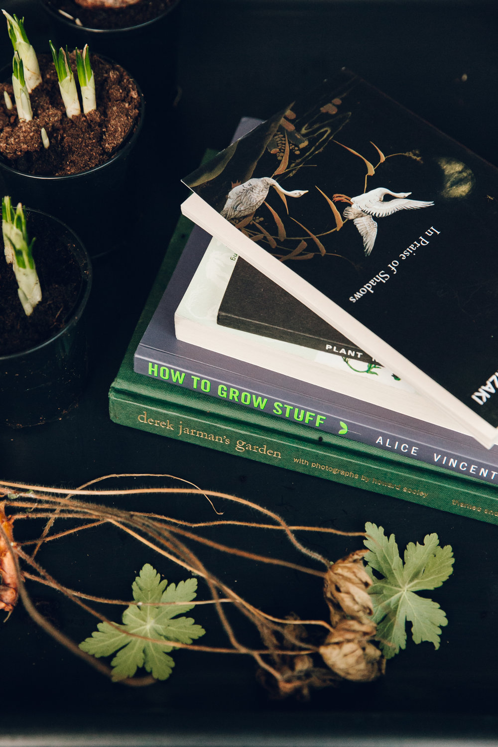 "Alice Vincent's new gardening book, ""How to Grow Stuff""."