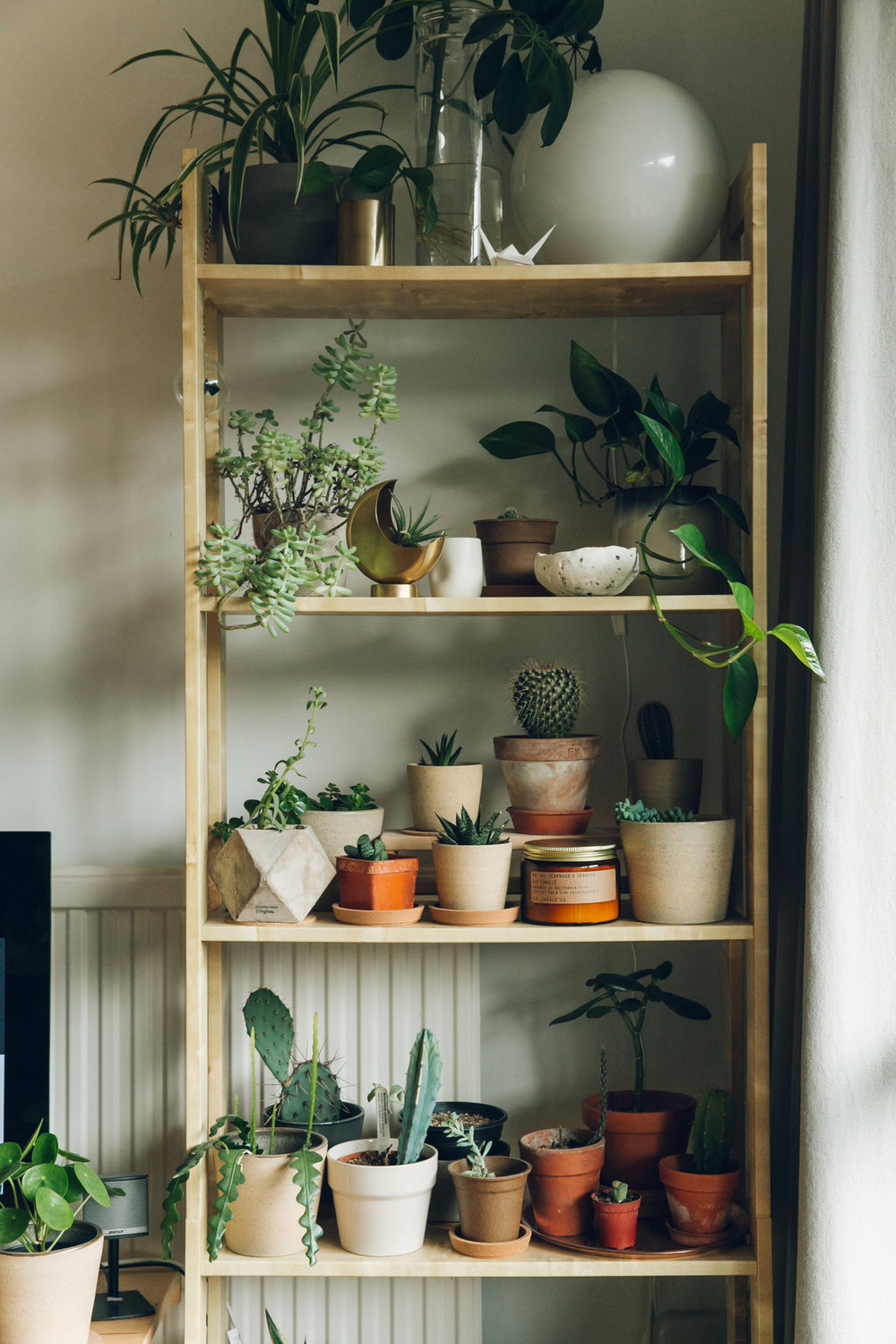 Indoor plant display with Urban Outfitters.