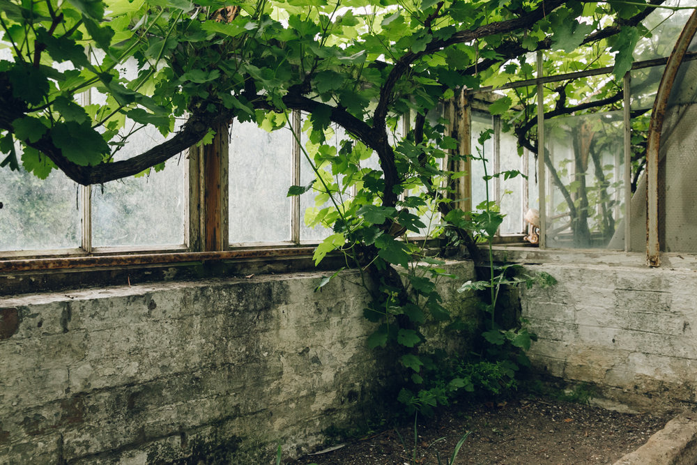 Overgrown greenhouse in England.