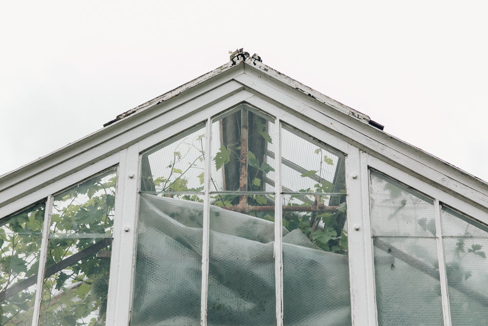 Overgrown greenhouse.