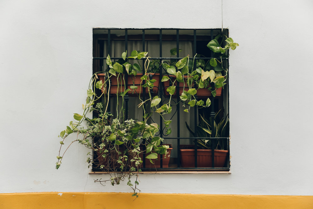 Plant-filled patios in Cordoba, Andalusia.