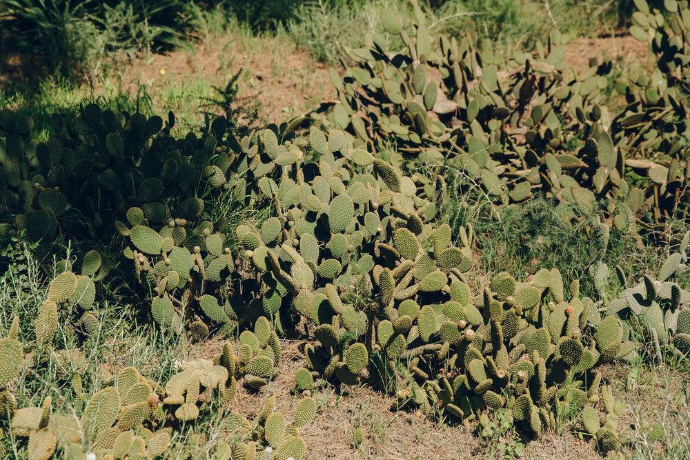 Cacti in Malaga Botanical Gardens, Spain.