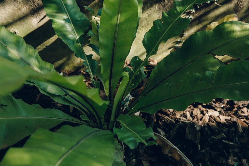 Fernery in Malaga Botanical Gardens, Spain.