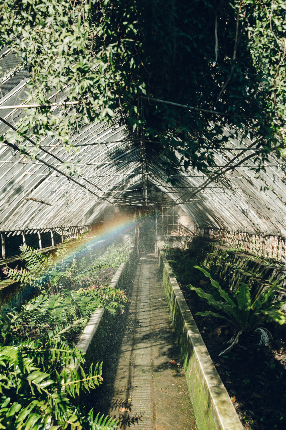 Rainbow inside a greenhouse.