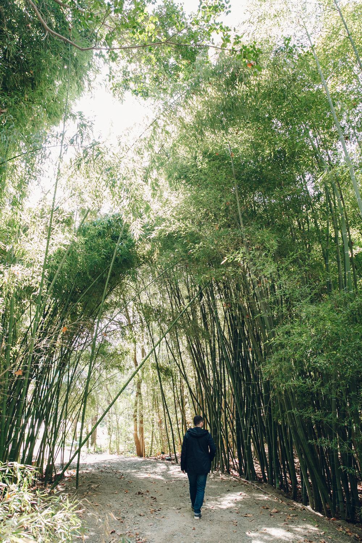 A bamboo grove in Malaga botanical gardens.
