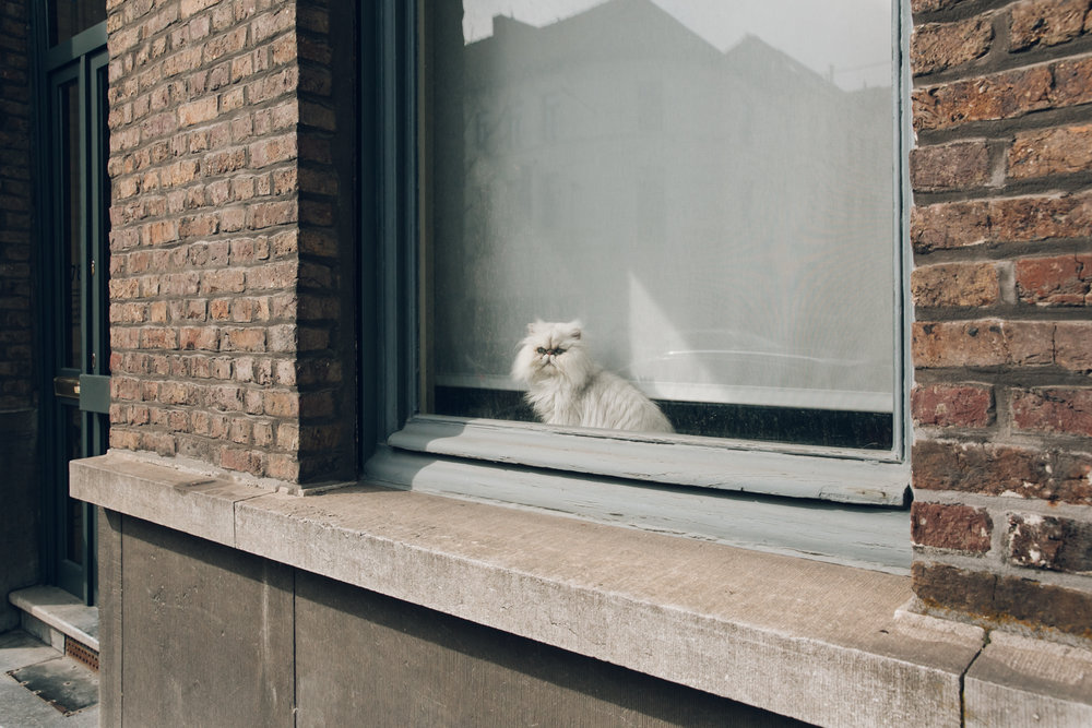 Coco the cat in a window in Gent, Belgium.