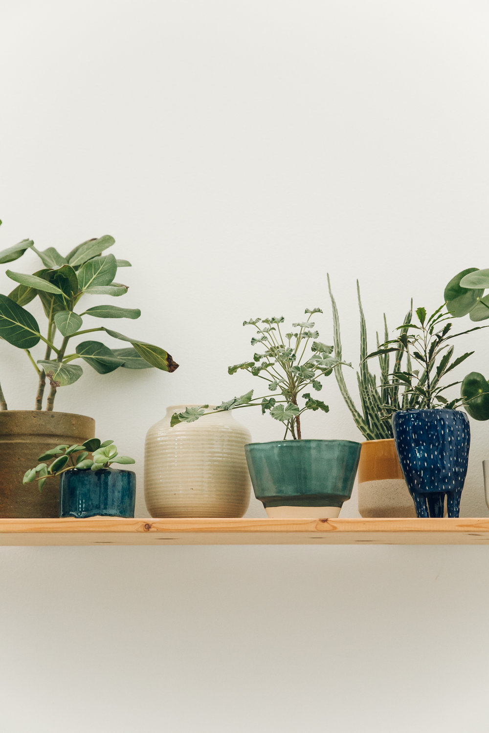 The plant-filled ceramics studio of Studio Hear Hear in Amsterdam.