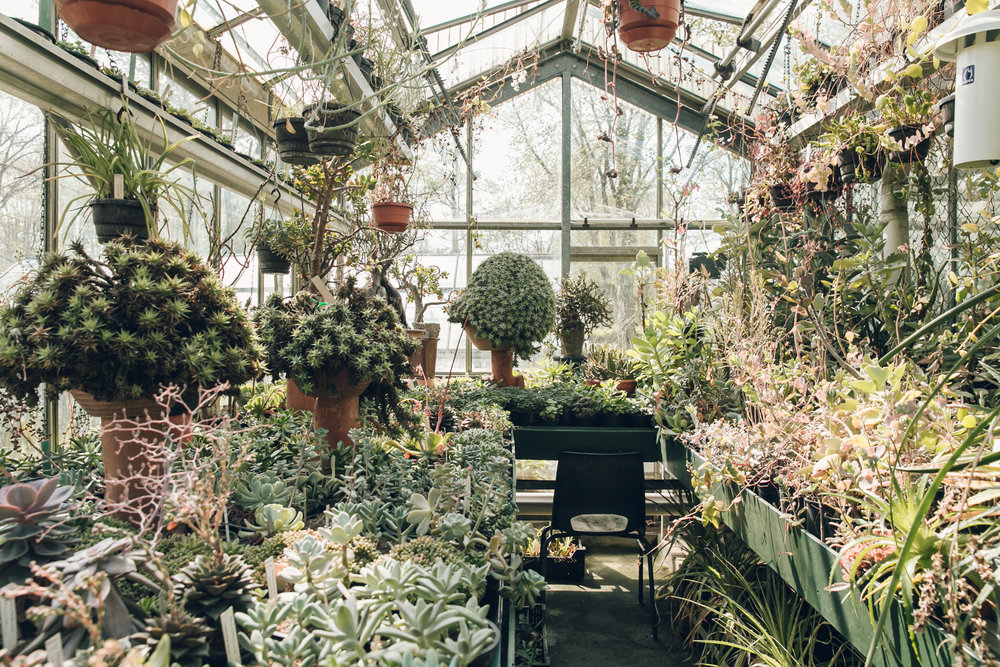 Inside the glasshouses at Botanische Tuin Zuidas in Amsterdam.