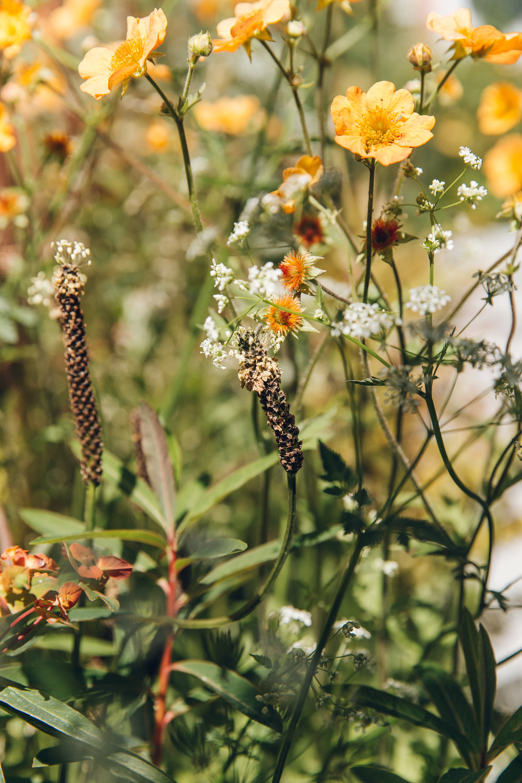 Haarkon's RHS Chelsea Flower Show 2017 highlights.
