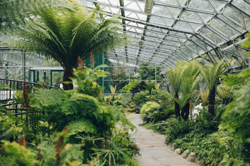 The David Welch Winter Garden in Duthie Park, Aberdeen - from the Haarkon Greenhouse Tour.